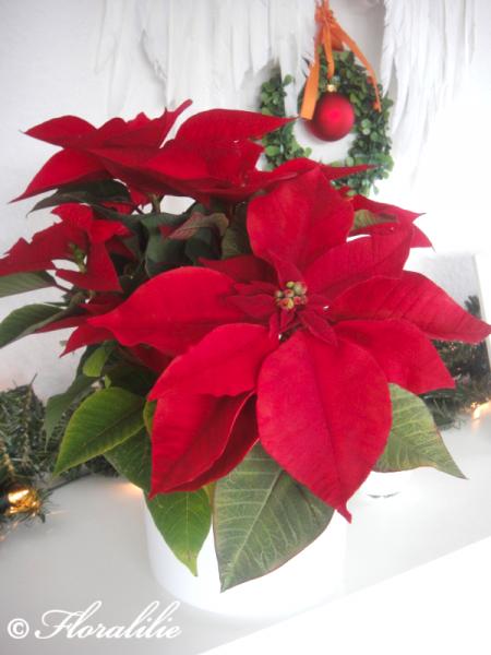 das ist mein weihnachtsstern motivtorten fotos forum. Black Bedroom Furniture Sets. Home Design Ideas