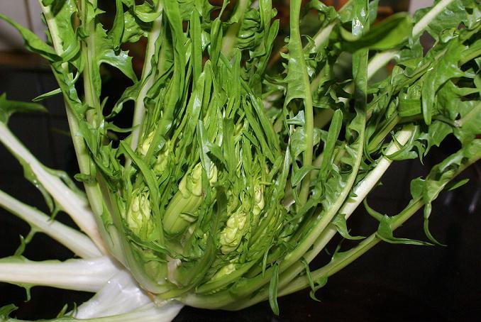 Conserve Di Zucchine Puntarelle