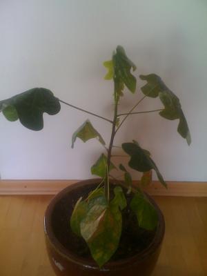 was ist das f r ein baum eine pflanze haus garten forum. Black Bedroom Furniture Sets. Home Design Ideas