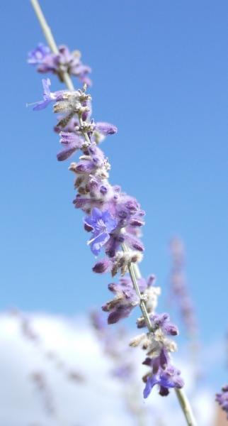 Unbekannte Pflanzen Hilft Bestimmen 1 Frucht Evtl Mispel 3 Blüh  Duftpflanzen 2149221809