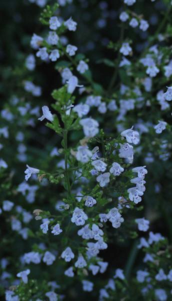 Unbekannte Pflanzen Hilft Bestimmen 1 Frucht Evtl Mispel 3 Blüh  Duftpflanzen 2722717786