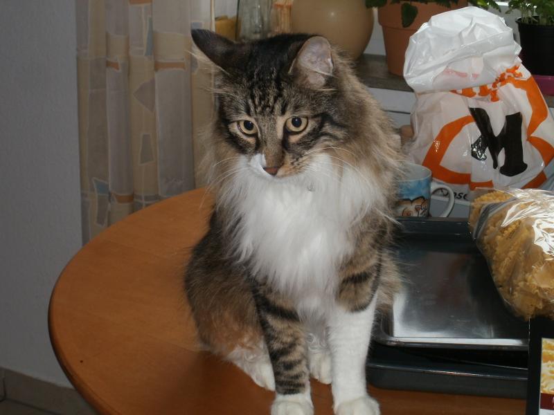 Katze scheren 779692544