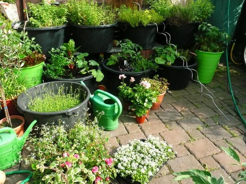 erdbeeren im balkonkasten pflanzen erdbeeren pflanzen pflegen und vermehren ndr ratgeber garten. Black Bedroom Furniture Sets. Home Design Ideas