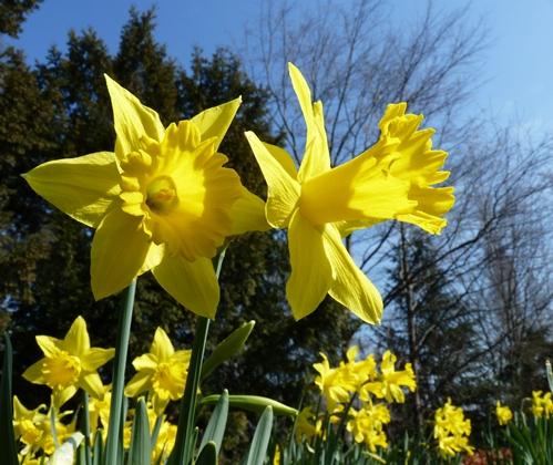 Gedichte Sprüche 23 März 2012 35116631